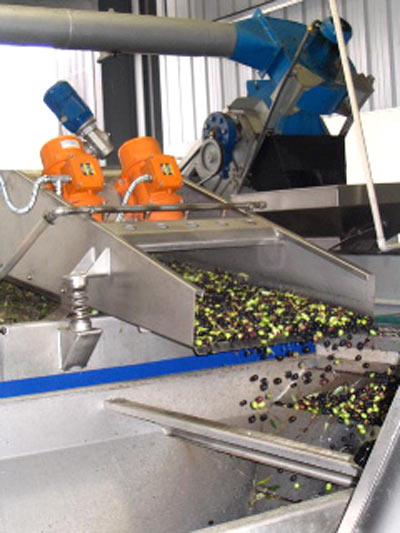 KATZ Harvest - Washing The Olives