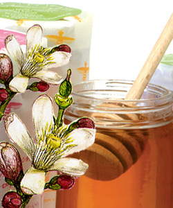 BRANCHES CITRUS BLOSSOM HONEY <br>2 sizes available