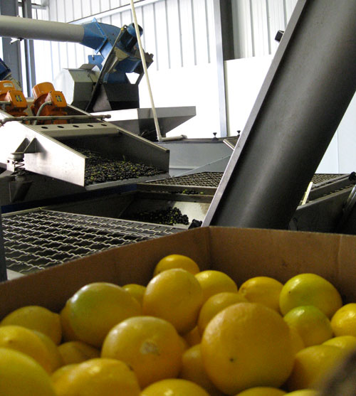 KATZ Olives & Meyer Lemons At The Mill
