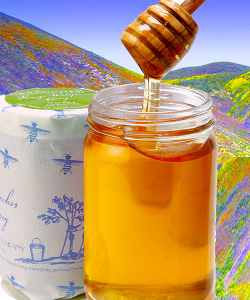 KATZ RANGE WILDFLOWER HONEY